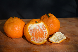 Satsuma Mandarin Orange (Citrus reticulata 'Satsuma') at Rainbow Gardens